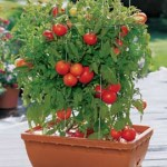 Help Me: Pot Gardening
